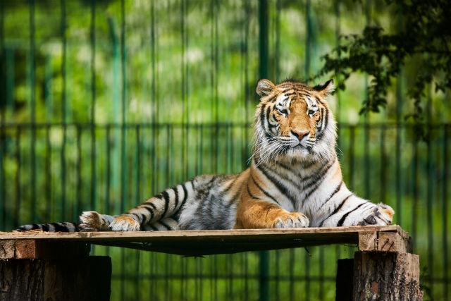 zoo ccw